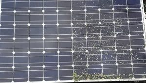 Solar Panel Cleaning Services: Local Domestic & Commercial Cleaning Services Contractors Near Me in Flintshire, Denbighshire, Wrexham, Cheshire, Wirral, Chester, Liverpool, Cheshire, Shotton, Connah's Quay, Queensferry, Hawarden, Ewloe, Drury, Buckley, Mynydd Isa, Northop, Northop Hall, Mold, Garden City, Saughall, Blacon, Chester, Pentre, Sandycroft, Mancot, Sychdyn, Alltami, Pen Y Ffordd, Higher Kinnerton, Deeside, Chester, Mold and Nearby Areas.